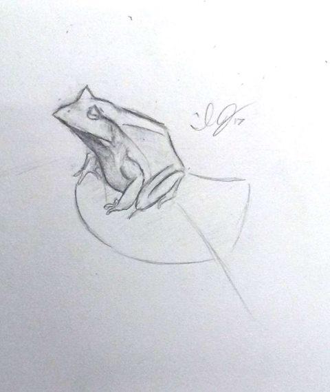 Soloman Island Leaf Frog