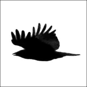 fotodispalle's Profile Picture