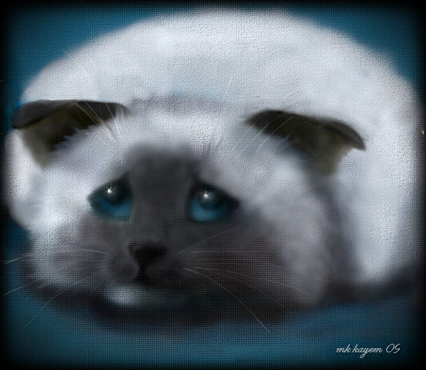 sad cat by mk-kayem