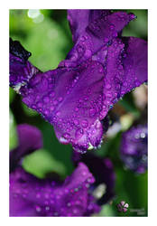 Purple rain by riekkie