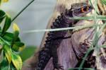 Fury the Crocodile