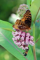 Long Mountain Butterfly