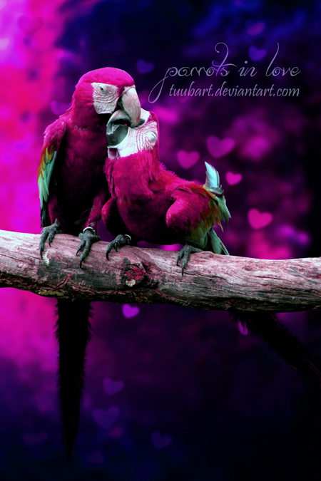 -parrots in love- by TuubArt