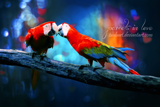 -parrots in love II- by TuubArt