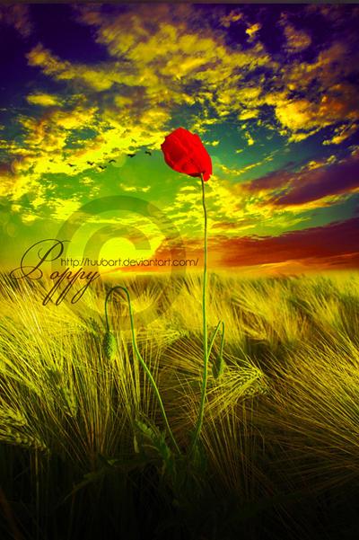 Poppy by TuubArt