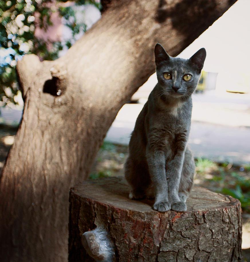 cat near the tree by bobtop on deviantart. Black Bedroom Furniture Sets. Home Design Ideas