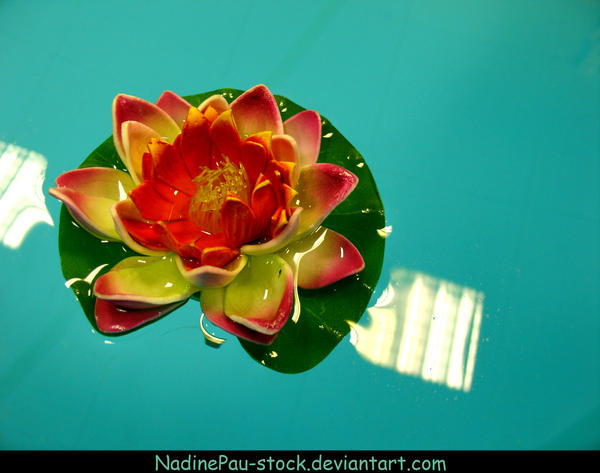 Plastic Water Lily By Nadinepau Stock On Deviantart
