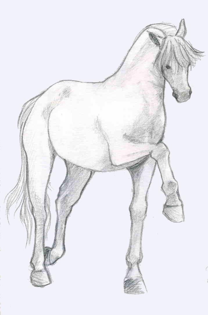 cheval quand tu nous tiens by zebree