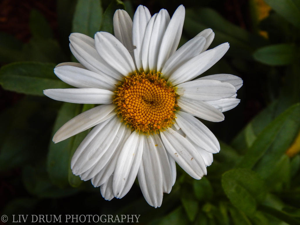 Untitled by livdrummer