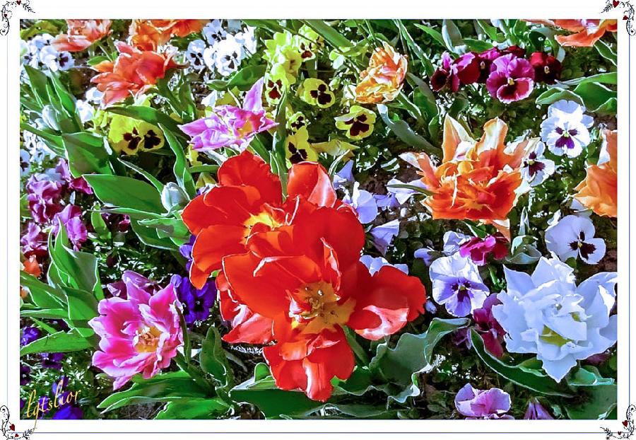 Sweet Flowers by Lior-Art