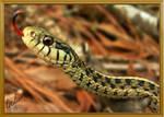 A Tongue Of Snake