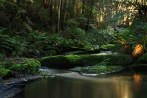 rainforest stock by blaisedrew62