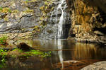 Sheoak Falls Stock