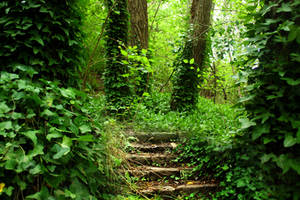 Forest Stairs Stock by blaisedrew62