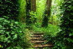 Forest Stairs Stock