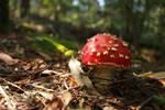 Red Fairy mushroom Stock