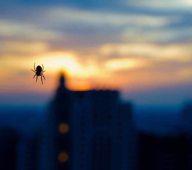 spider sunset by delobbo