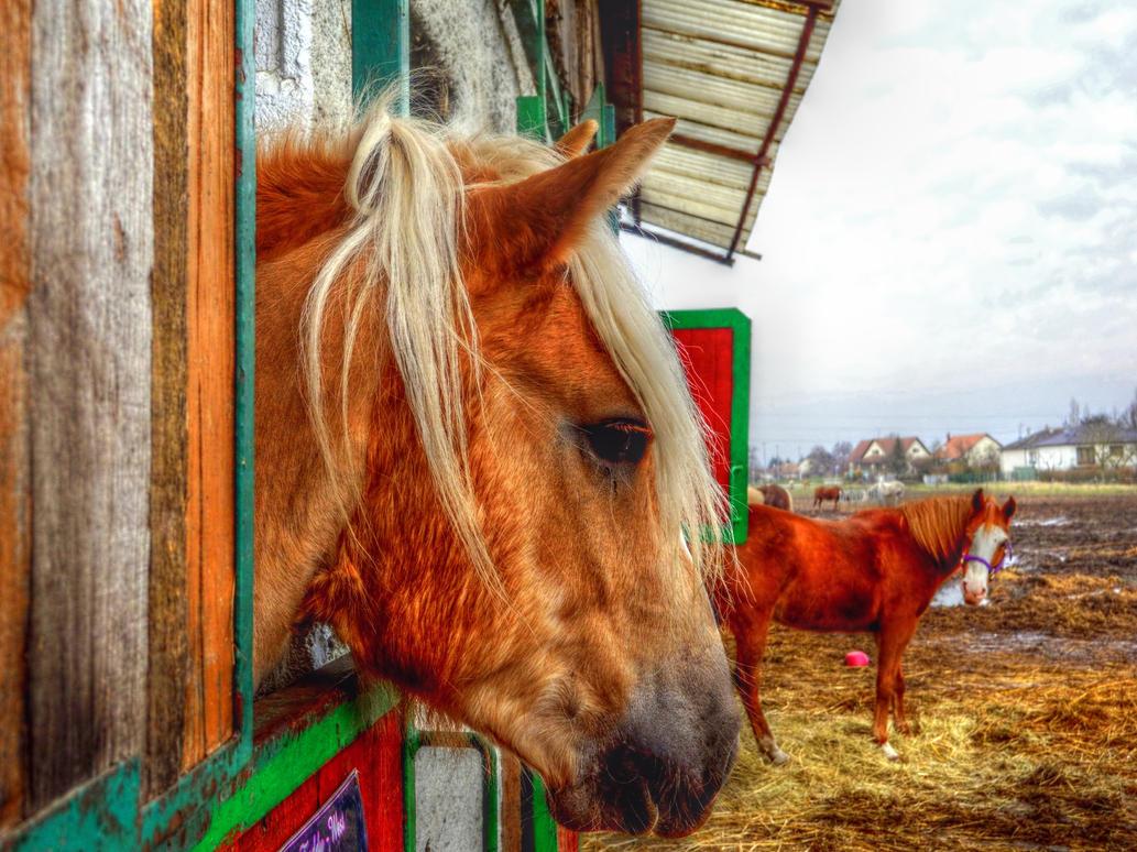 Horses by praveenpankaj