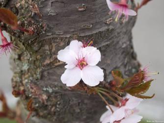 Spring by Merkosh
