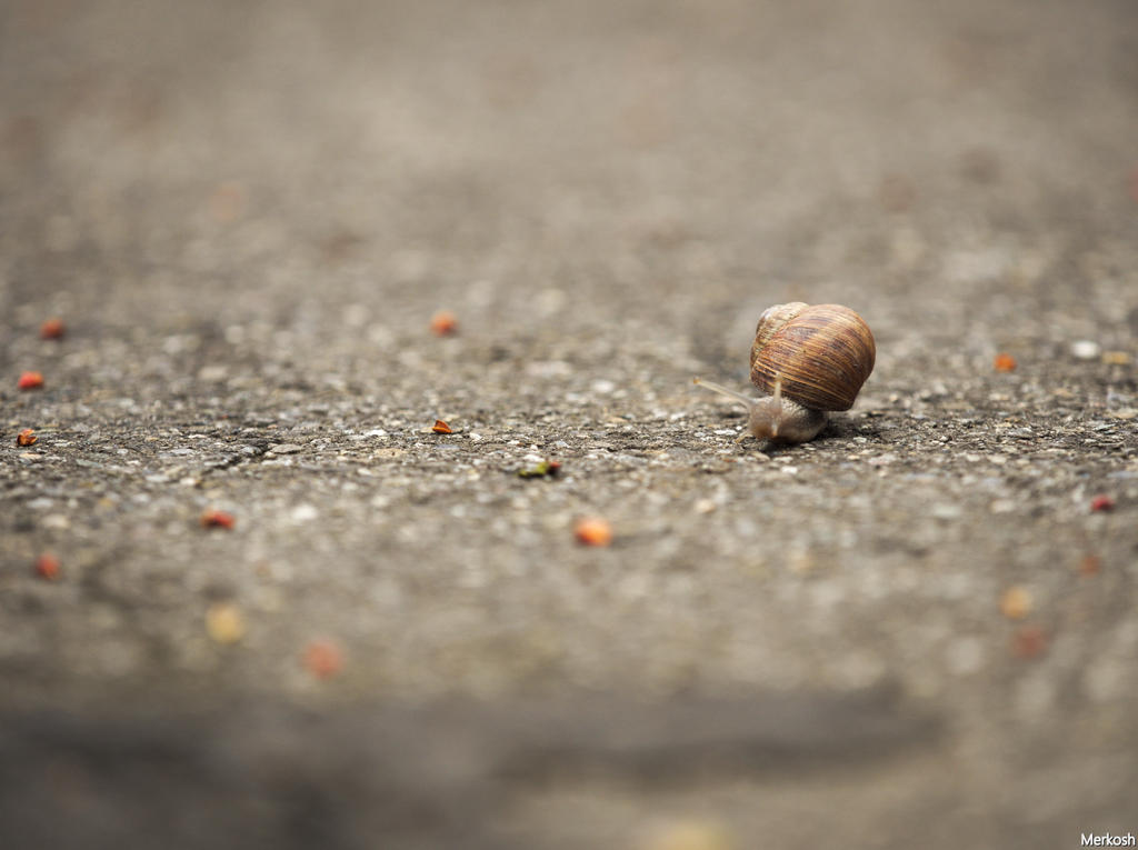 Snail is on the way by Merkosh