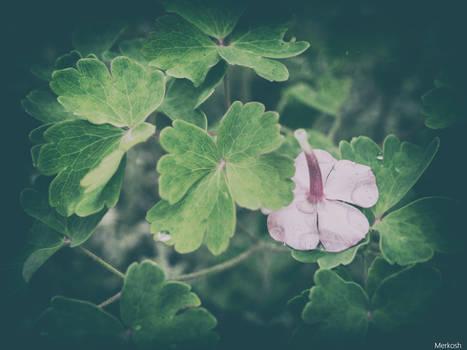 Flower has Fallen