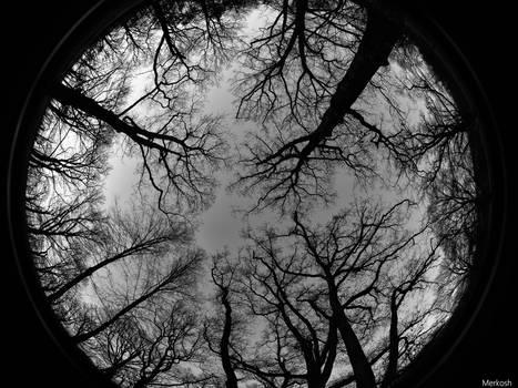 Like veins through the sky