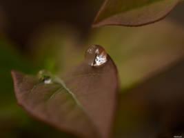 Ein Tag ein Bild - 208 by Merkosh