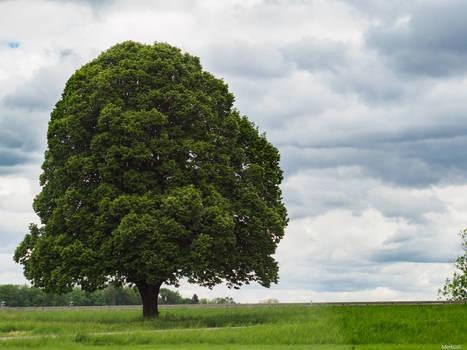 Ye ol' tree