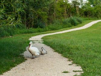 Walk this way by Merkosh