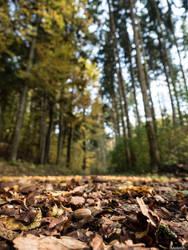 Oak by Merkosh
