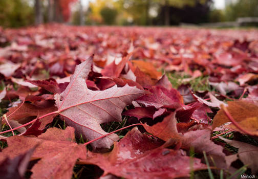 Red leaf carpet