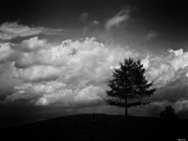 Landscape Noir -2- by Merkosh