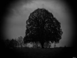 Dark by Merkosh