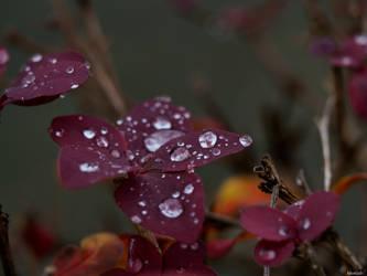 Raindrops II by Merkosh