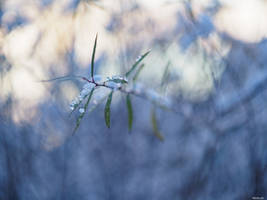 Out of the Bokeh by Merkosh