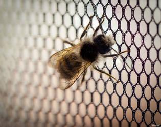 Small bee by Merkosh
