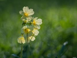 Yellow by Merkosh