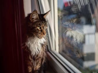 Watching the outside by Merkosh