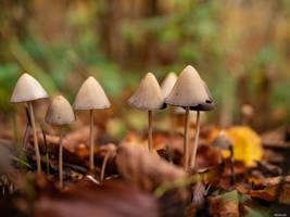 Fungi by Merkosh