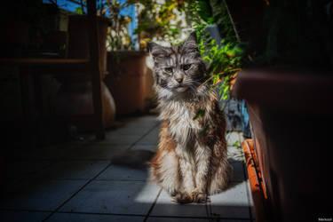 A wild balcony cat appears