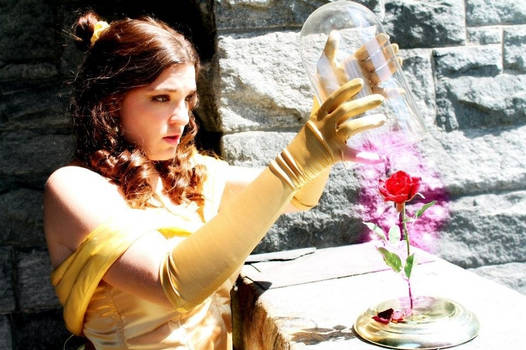 Princess Belle Cosplay - The Enchanted Rose