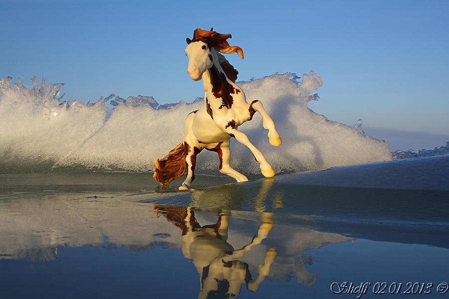 Wildest Dream by Shelfi
