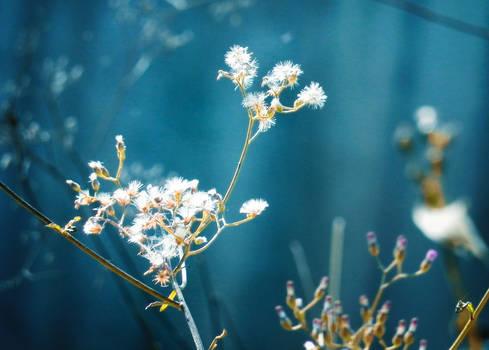 grass flower 2