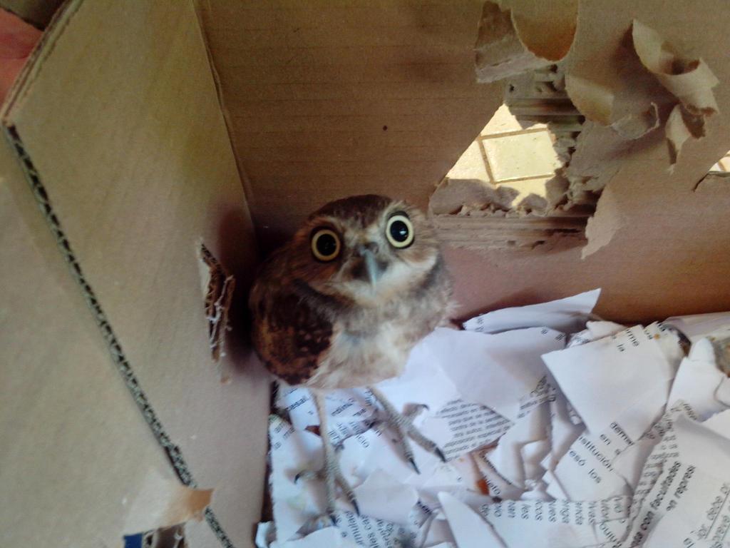Owla Y Adios, Baby Owl! by Clockchat