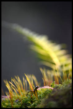 Blooming Moss