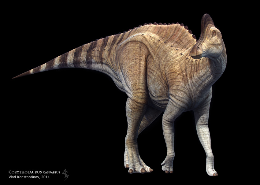 Corythosaurus casuarius by Swordlord3d