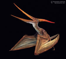 Pteranodon longiceps by Swordlord3d