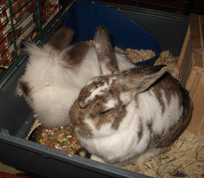 bunnies by FinnRock