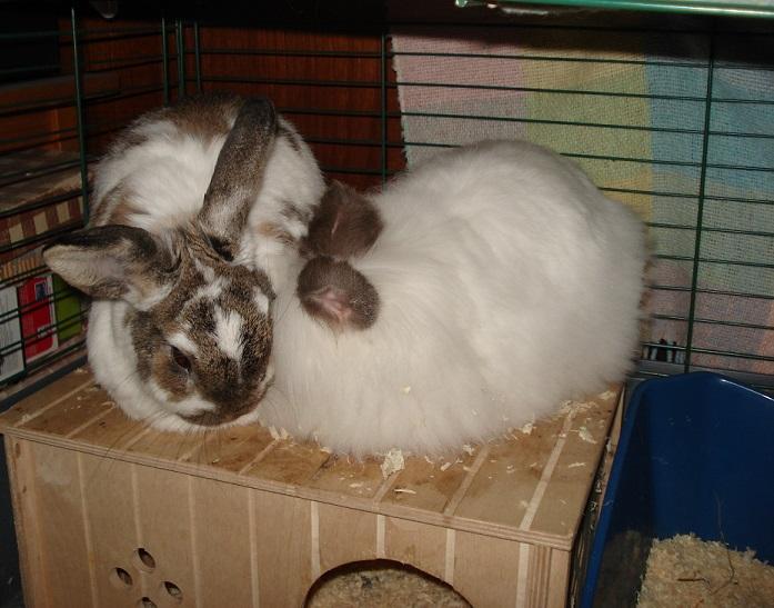 bunnies 2 by FinnRock