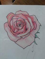 Rosa a lapiz